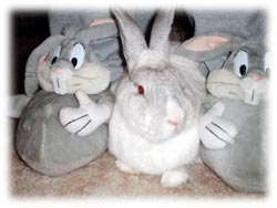 Enjoy our Bunny pics slideshow!